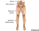 Arterial bypass leg - series - Normal anatomy