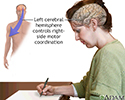 Left cerebral hemisphere - function