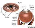 External and internal eye anatomy